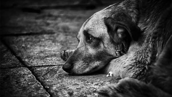 В Бельцах школьники нашли трупы собак со снятыми шкурами