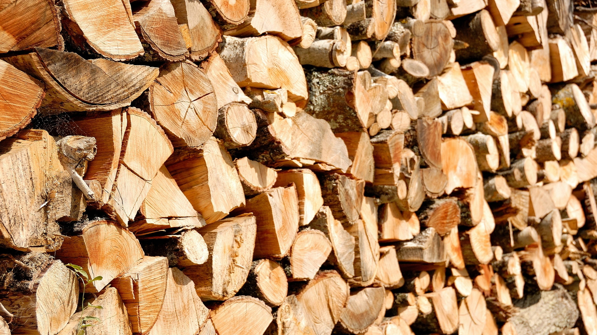 Муниципальное предприятие отчиталось о том, что делают со срубленными в Бельцах деревьями
